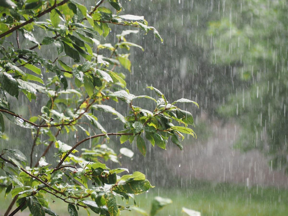 L'eau de pluie