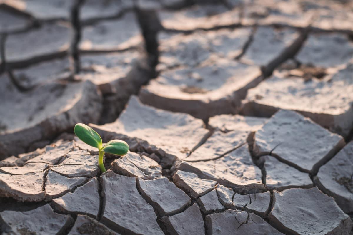 Croissance démographique, réchauffement climatique