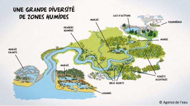 Diversité des zones humides