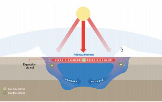 Principe des courants de densité (source : Surfrider Foundation Europe)